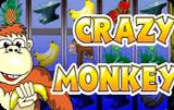 Видео-слот Crazy Monkey