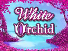 Игровой аппарат Белая Орхидея